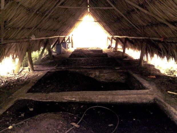 Blancaneaux Lodge Compost Pile