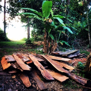 Wood slabs from Belize's Mennonite community used at Blancaneaux Lodge to make raised garden beds.